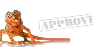 Procurement – The Organizational Chameleon